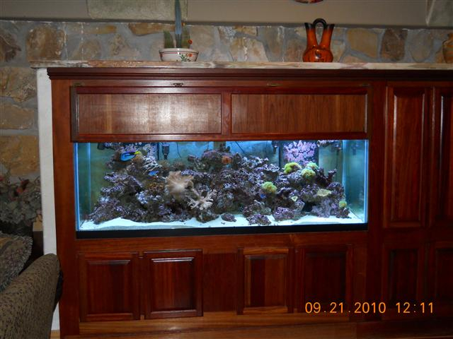 20 gallon saltwater fish only tank artificial coral reef for Fish only saltwater tank