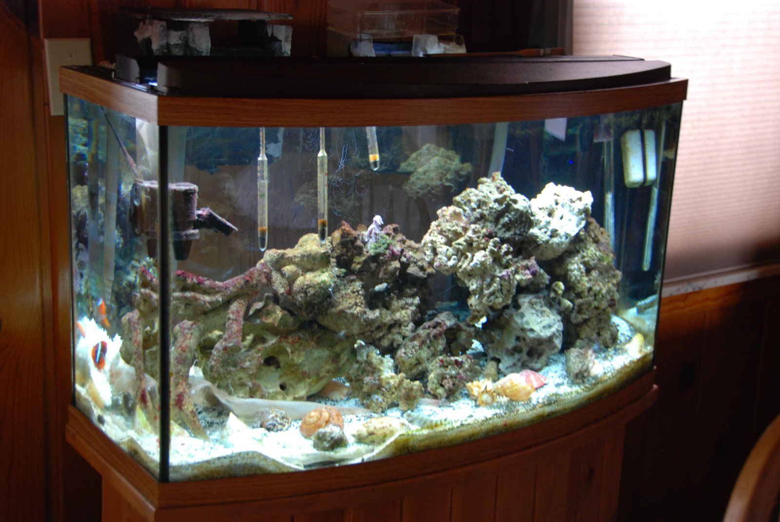 Pin Saltwater Fish Only Tank With Approx 100 Lbs Live Rock The Aquar ...