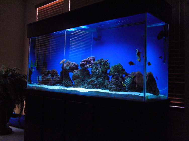 samples of salt water fish tanks only at feldman 39 s