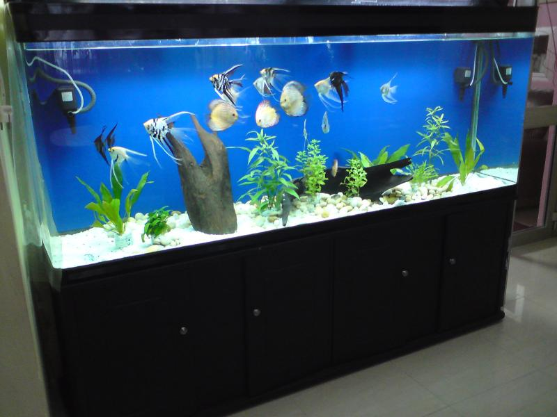 Samples Of Fresh Water Fish Tanks Only At Feldman 39 S