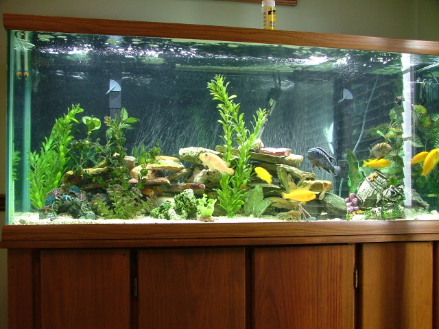 Freshwater fish tank care best fish 2017 for Fish tank care