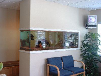Fish Tank 10