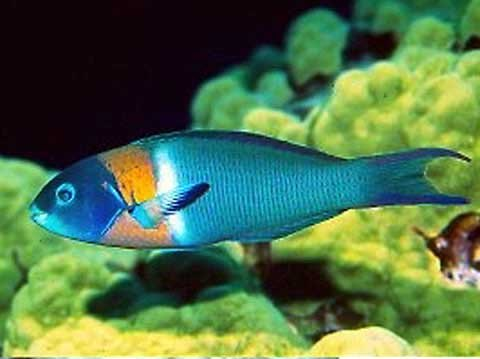 feldman�s aquarium